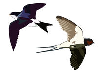 Flying swallows Royalty Free Stock Photos