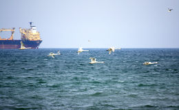 Flying swans and cargo ship Royalty Free Stock Photography