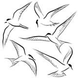 Flying tern sketches royalty free stock photos