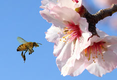 Flying to honey Royalty Free Stock Photography