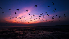 Flying together Royalty Free Stock Photography