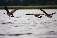 Flying towards new land Stock Image