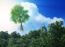 Flying tree Royalty Free Stock Image