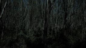 Flying Through Tree Forest at Night. Shot with a DJI Mavic fps 29,97 4k stock video