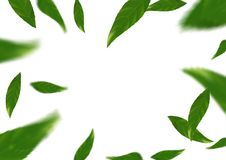 Flying tree fresh leaves over white layout - abstract background Stock Image