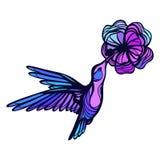 Flying tropical hummingbird on white background Stock Photo