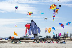 Flying a Variety of Figure Kites at the Adelaide International K Stock Images