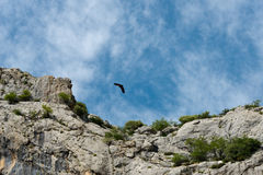 Flying vulture. At mountain range in sierra de grazalema, andalusia, spain stock photography
