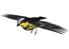 Flying Warbler Stock Image