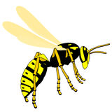 Flying wasp Stock Photography