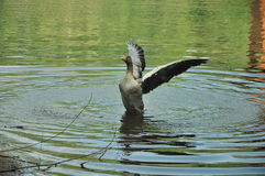 Flying in water Royalty Free Stock Photography