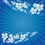 Flying White Blue flowers on dark blue rays background. Apple-tree flowers. Cherry blossom. Vector.  stock illustration