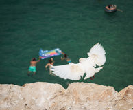 Flying white dove above a company of young people on the air mattresses in the sea Royalty Free Stock Photo