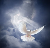 Flying white dove on blue sky background Stock Photography