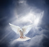 Flying white dove on blue sky background Royalty Free Stock Images