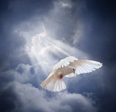 Flying white dove on blue sky background Royalty Free Stock Photography