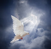 Flying white dove on blue sky background Stock Images