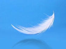 Flying white feather on blue Royalty Free Stock Photos