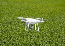 Flying white quadrocopters over a field of wheat Royalty Free Stock Image