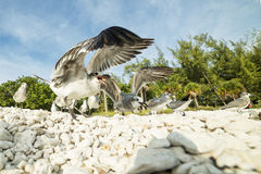 Flying white seagull on a pale blue background. Group of seagulls struggle for a piece of food on the beach, close-up view of the head stock images