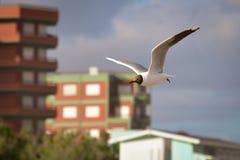 Flying seagull bird stock image