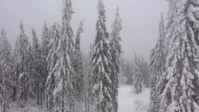 Flying through a winter fairy forest in winter foggy weather. Filmed at various speeds: normal and accelerated stock footage