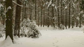 Flying in winter forest. Clean and frosty daytime stock footage