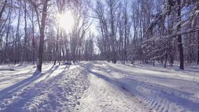 Flying into the wood between the trees strains in winter stock video footage