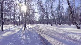 Flying into the wood between the trees strains in winter stock footage