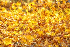 Flying yellow leaves on the wind stock image
