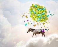 Flying zebra Stock Images