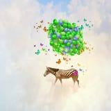 Flying zebra Stock Photography