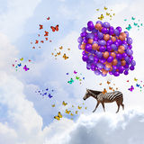 Flying zebra Royalty Free Stock Photos