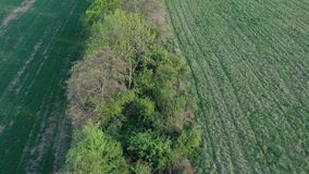 Flyovyer above field balk leading to spring forest, evening sunshine, 4K stock video