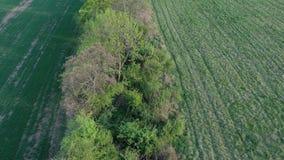Flyovyer sopra l'ostacolo del campo che conduce alla foresta della molla, uguagliante sole, 4K archivi video
