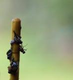 Flys на ручке Стоковая Фотография RF