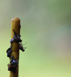 Flys on stick. Flys stuck on a stick on blurry background Royalty Free Stock Photography