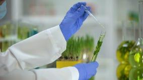 Flytande för stekflott för labbassistent i rör med växten, organisk cosmetologyextrakt arkivfilmer