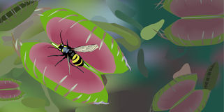 flytrap Αφροδίτη Στοκ Εικόνες