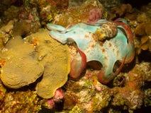 flytta bläckfisken Royaltyfri Foto