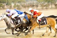 Flytta sig av hästkapplöpning Arkivfoto