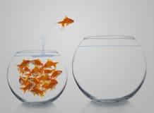 flytta sig för guldfisk Arkivfoton