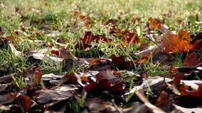 Flytta sig förbi gräs med dagg i morgonen arkivfilmer