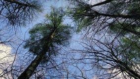 Flytta sig under enorma träd i träna stock video