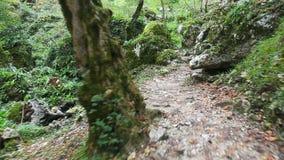 Flytta sig vid banan till och med den lösa gröna skogen arkivfilmer