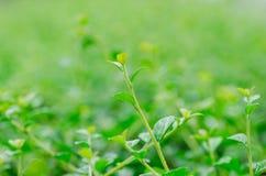 flyttad fram för fotoväxt för bakgrund god grön behandling Royaltyfri Foto