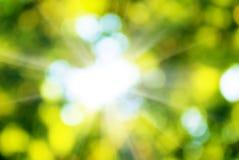 flyttad fram för fotoväxt för bakgrund god grön behandling Royaltyfria Foton