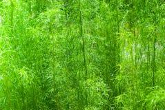 flyttad fram för fotoväxt för bakgrund god grön behandling Arkivfoto