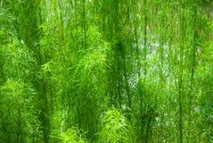 flyttad fram för fotoväxt för bakgrund god grön behandling Royaltyfri Fotografi