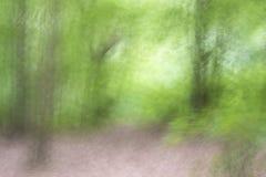 Flyttande träd i skogen royaltyfri foto